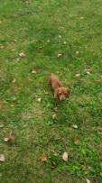 Caron's new pup!! Meet Cujo!